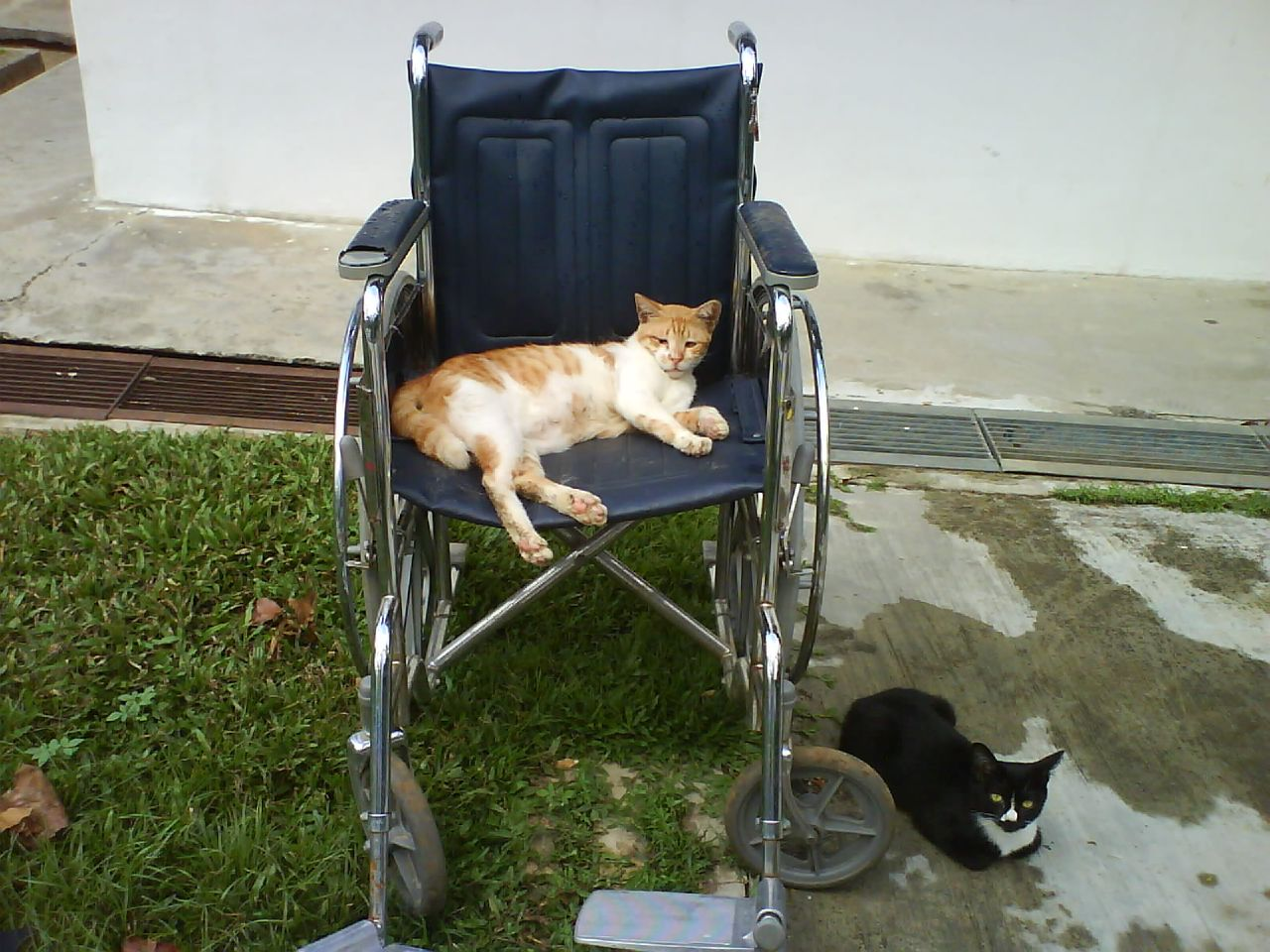 Katze in altem Rollstuhl