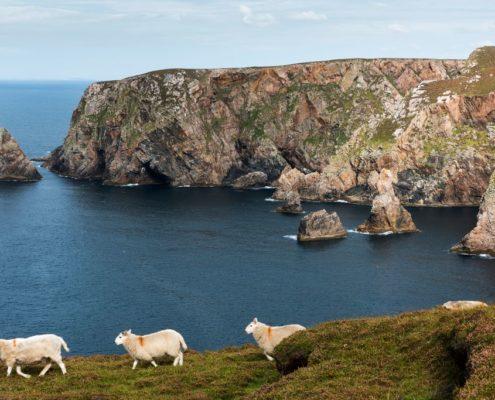 Irische Küste mit Schafen