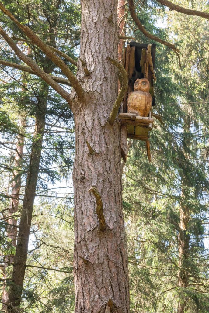 Eule im Baum